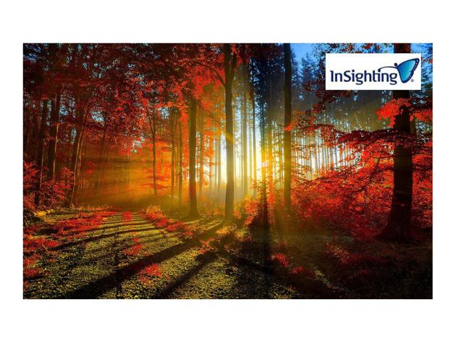 Insighting.bg - професионален психотерапевт